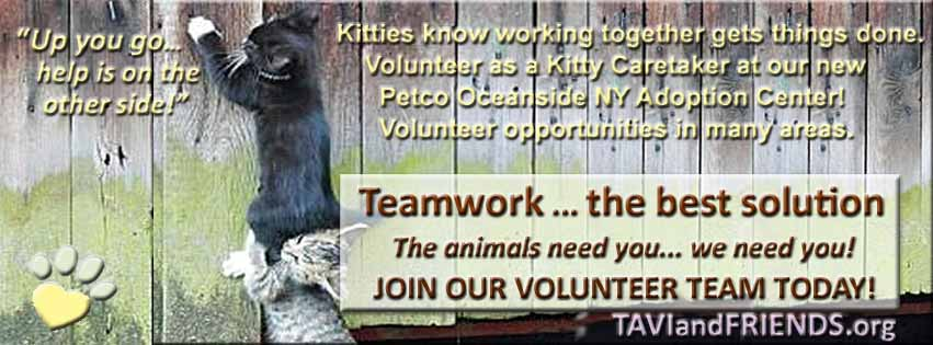 Flyers/Volunteerkittycaretaker.jpg